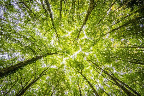Cambiamenti Climatici - The Grand Challenge